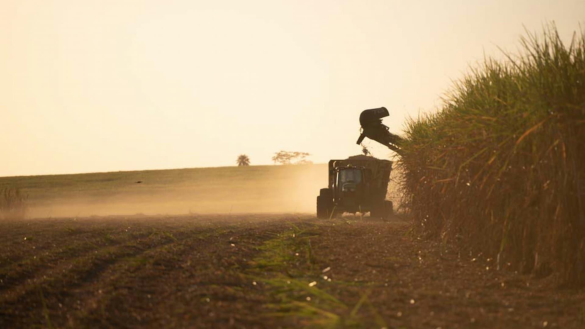 John Deere sugar cane harvester moving through a field.